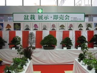 bonsai_2141.JPG